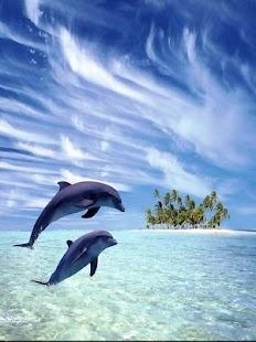 海洋精靈:海豚