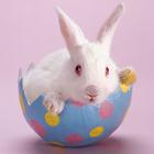 ウサギジグソーパズル icon