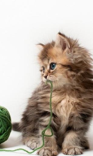 小貓動態壁紙