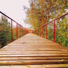 Bridge in the park by Ana Wisniewska - City,  Street & Park  Amusement Parks