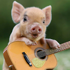 Pig plays the guitar and sings icon
