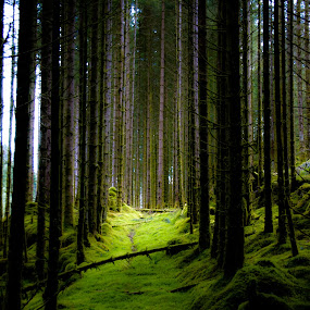 by Jose Figueiredo - Landscapes Forests ( trees, forest, norway, , renewal, green, forests, nature, natural, scenic, relaxing, meditation, the mood factory, mood, emotions, jade, revive, inspirational, earthly, #GARYFONGDRAMATICLIGHT, #WTFBOBDAVIS )