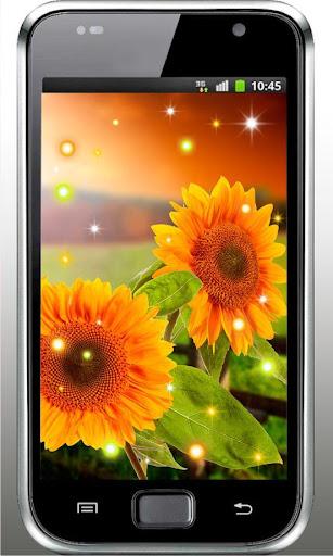 Sunflowers Free live wallpaper