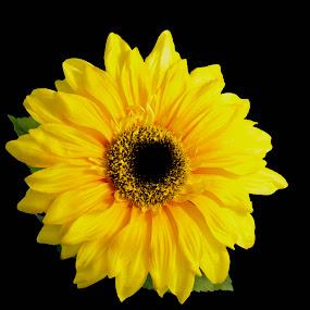 sunny flower by Star Image - Flowers Single Flower ( sun flower bright color black,  )