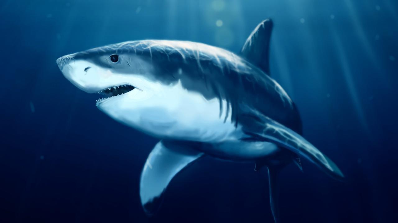 live shark wallpaper - photo #23