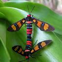 Handmaiden Moth