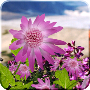 Flowers Live Wallpaper 個人化 App LOGO-APP試玩
