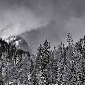 Hallett Peak RMNP by Johnny Gomez - Black & White Landscapes