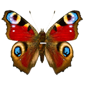 Butterflies PRO Live wallpaper