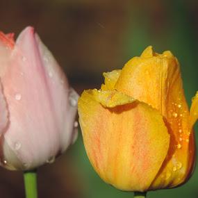 by Michelle Cutt - Flowers Flower Buds