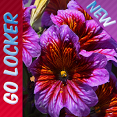 Bright Flowers II GO LOCKER