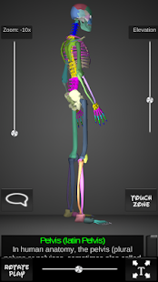Bones Human 3D (anatomy) - screenshot thumbnail