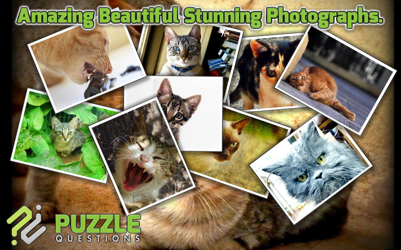 Free Kitty Cat Puzzle Games- screenshot