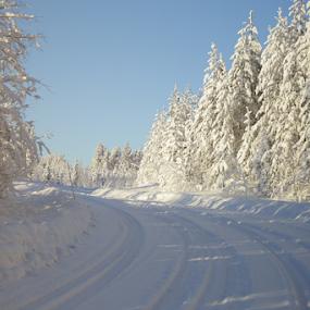 Golden winter sun by Elisabeth Johansson - Landscapes Sunsets & Sunrises ( sweden, boden, winter, cold, snow, snowy, trees, glow, sun )