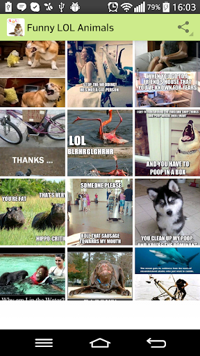Funny LOL Animals