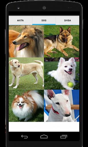 【免費生活App】Akita Dog Sounds-APP點子