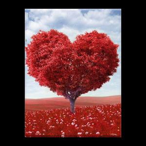 اجمل اشعار الحب ٢٠١٤