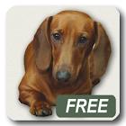 Dachshund sad song Free icon