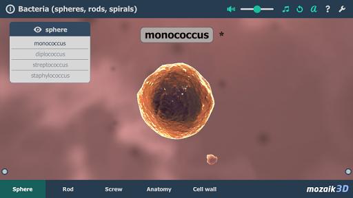 Bacteria Interactive 3D
