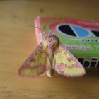 Pink-spotted flower moth