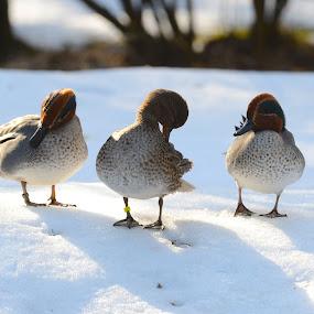 by Metka Majcen - Animals Birds