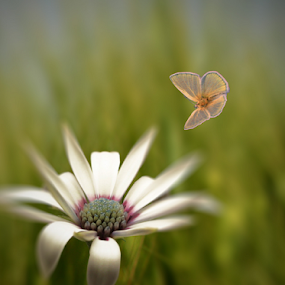 by Sanja Dedić - Flowers Flowers in the Wild (  )