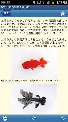 金魚図鑑ベスト100のおすすめ画像5