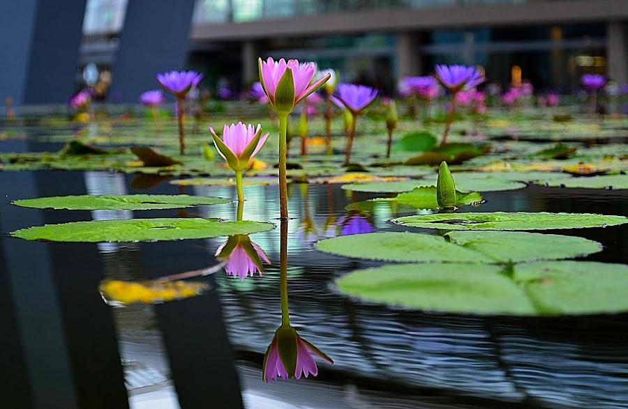 by Loh Sky - Flowers Flowers in the Wild