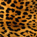 Leopard Print Wallpapers icon