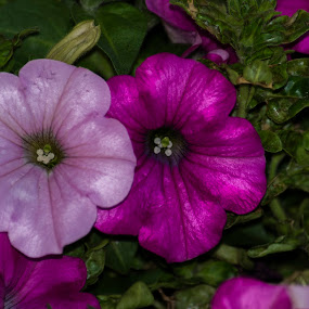 Flowers-pinkish by Jgr Jgr - Nature Up Close Gardens & Produce