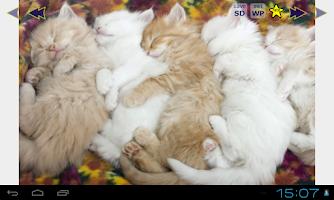 Screenshot of Cute Cats Gallery Wallpapers 2
