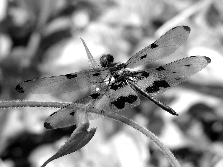 by Malay Maity - Black & White Animals (  )
