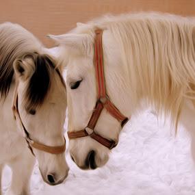 ... by Hale Yeşiloğlu - Animals Horses ( love, horses, tete a tete, horse, lovely,  )