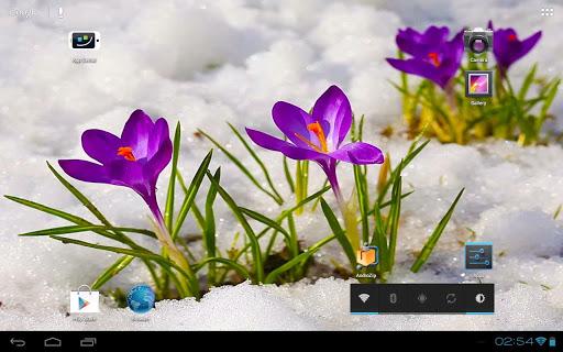 Crocus Flowers Among Icy Snow|玩個人化App免費|玩APPs