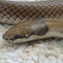 Curl snake