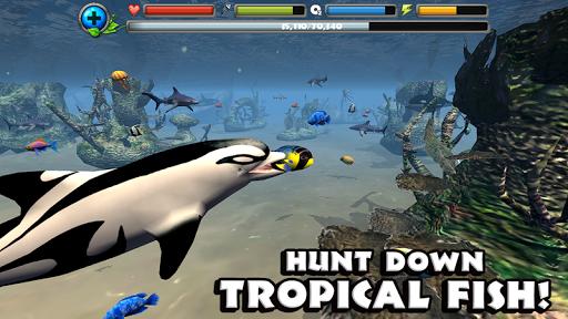 Dolphin Simulator image   14