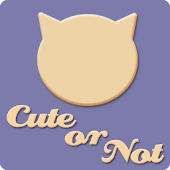 Cute or Not: Random Cats!