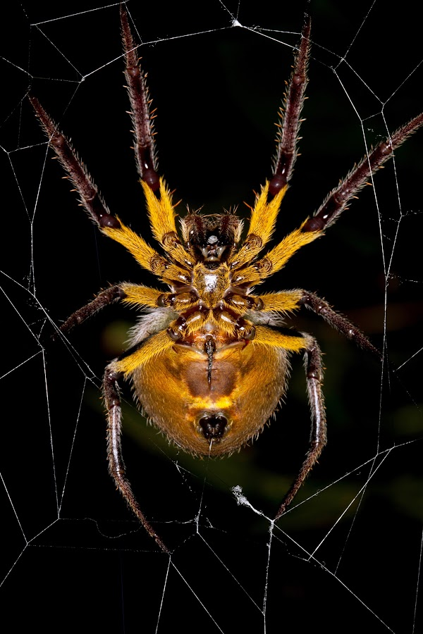 by Brian Lee - Animals Insects & Spiders ( web, spiderweb )