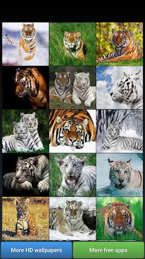 Big Cats HD Wallpapers