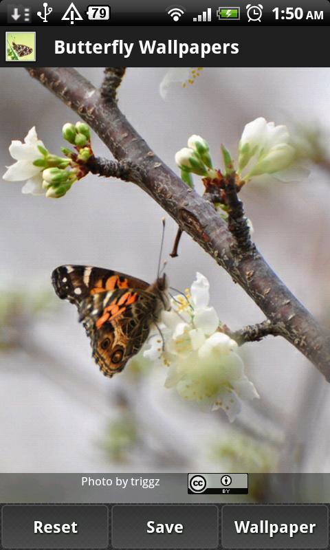 Butterfly Wallpapers - screenshot