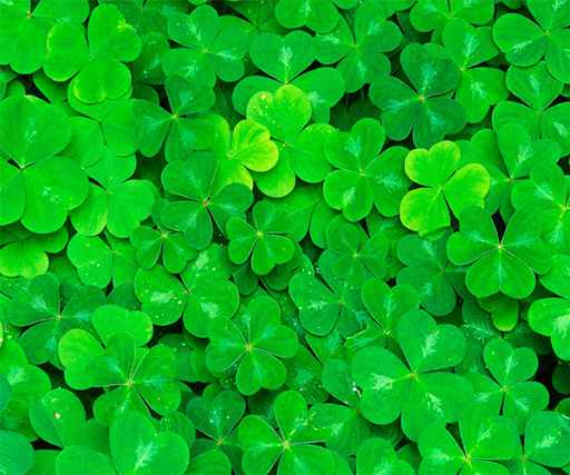 Lucky Clover Live Wallpaper