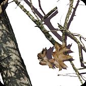 Mossy Oak White Theme