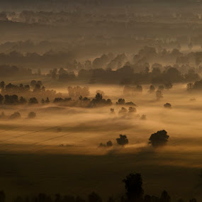 Ljubljana marsh by Rafael Kos - Landscapes Prairies, Meadows & Fields ( fog, ljubljana, marsh, trees, morning, mist )