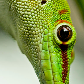 I See You by Kelly Goode - Animals Reptiles (  )