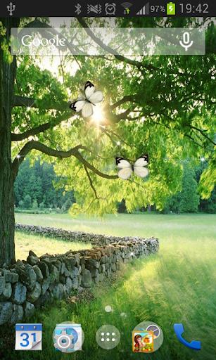 Season Tree Live Wallpaper