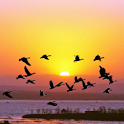 Nature Puzzle: Sunset D icon