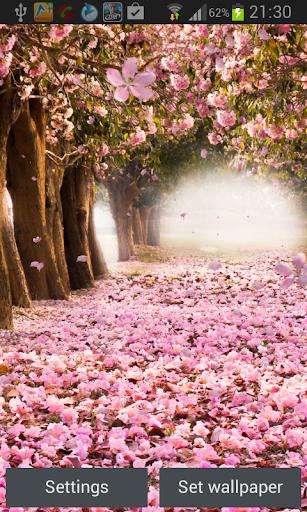櫻花動態壁紙