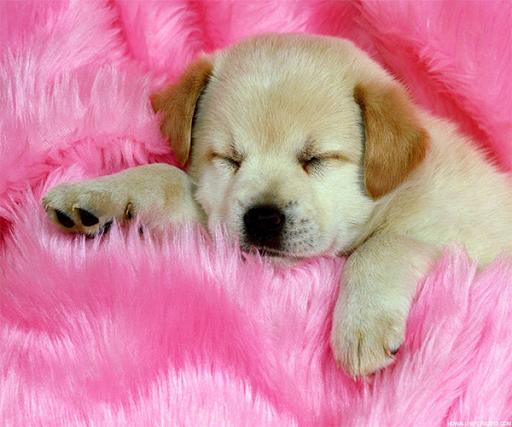 Cute Dog Live Wallpaper
