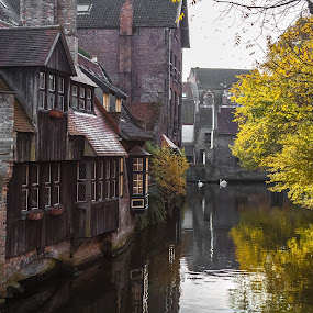 Bruges Calm by Stephen Bridger - City,  Street & Park  Neighborhoods ( calm, swans, reflection, europe, swan, bruges, belgium, travel, medieval, canal, travel photography )