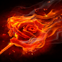 Rose Of Fires Live Wallpaper icon